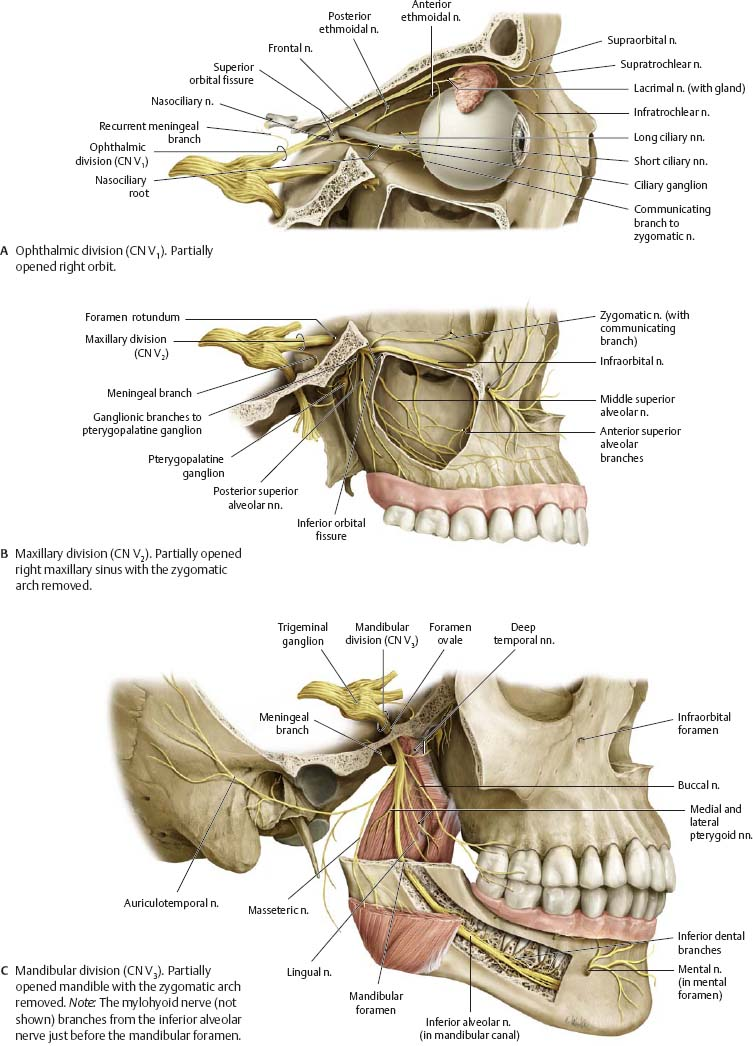 Cranial Nerves - Atlas of Anatomy