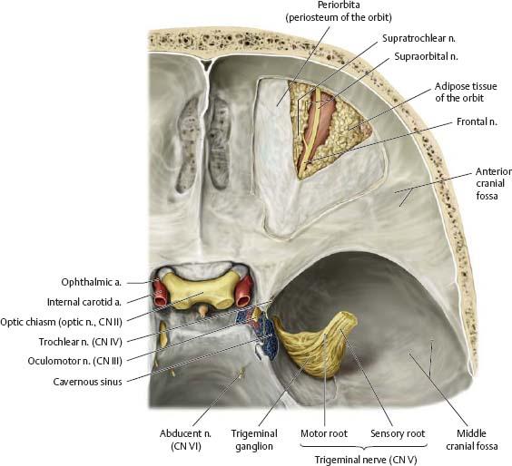 Orbit & Eye - Atlas of Anatomy