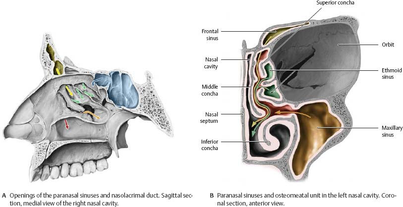 Nasal Cavity & Nose - Atlas of Anatomy