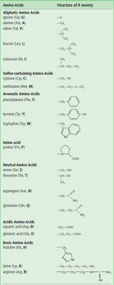 Amino acids and proteins medical biochemistry the three letter and single letter abbreviations in common use are given in parentheses aliphatic amino acids thecheapjerseys Images