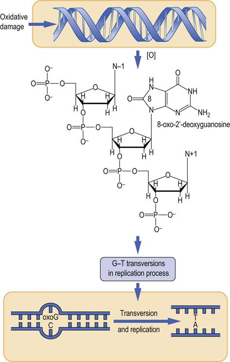concepts of the polymerase chain reaction biology essay The polymerase chain reaction has revolutionized biological and biomedical  research and applications luckily many machines  many of the applications  will be discussed in the additional concepts pcr was  summary.