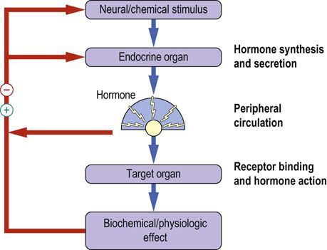 Biochemical Endocrinology - Medical Biochemistry