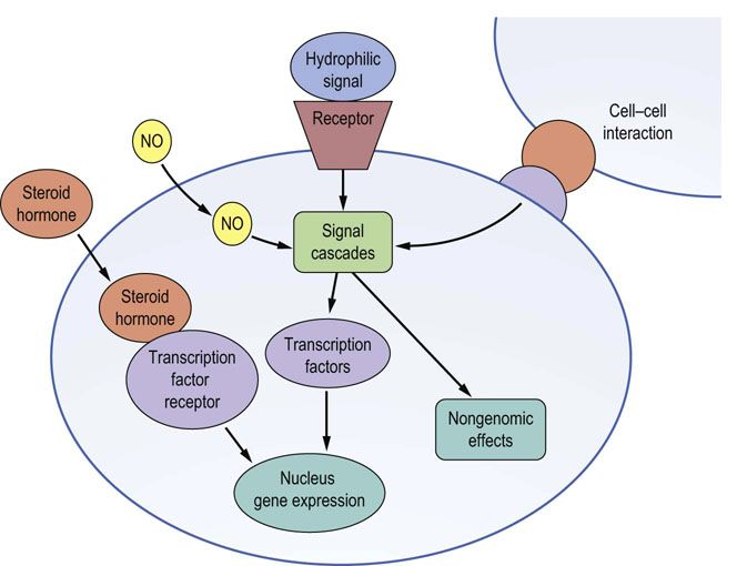 Membrane receptors and signal transduction medical biochemistry 1 mechanisms of cell signaling no nitric oxide ccuart Image collections