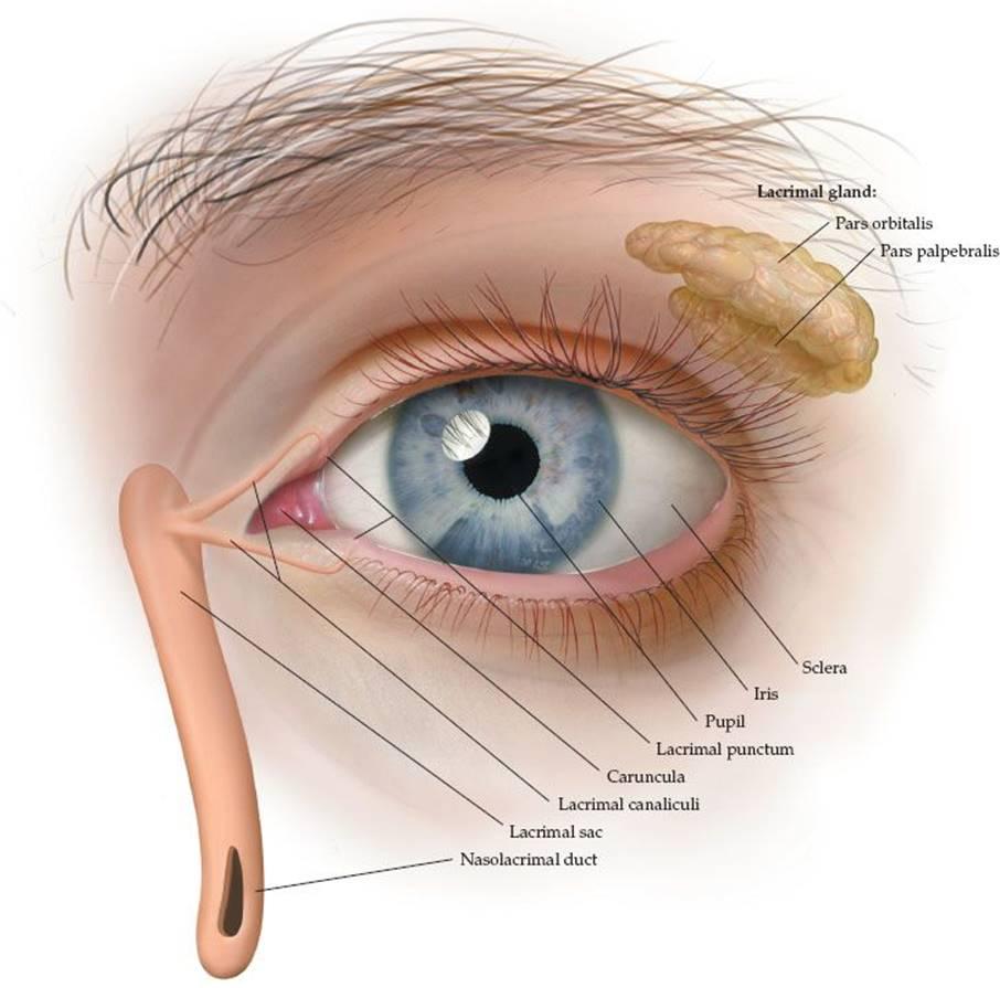 Eye Disorders - Pediatrics - Harwood-Nuss\' Clinical Practice of ...