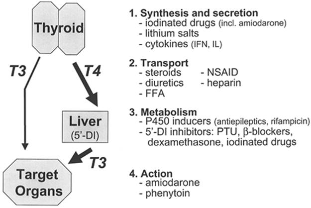 Effects Of Drugs And Other Substances On Thyroid Hormone Synthesis
