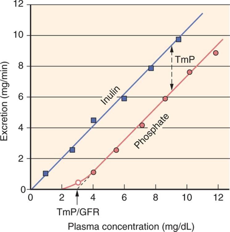 sodium and magnesium relationship