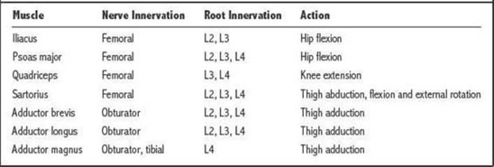 neuromuscular i (neurophysiology, plexopathy, and neuropathy, Muscles