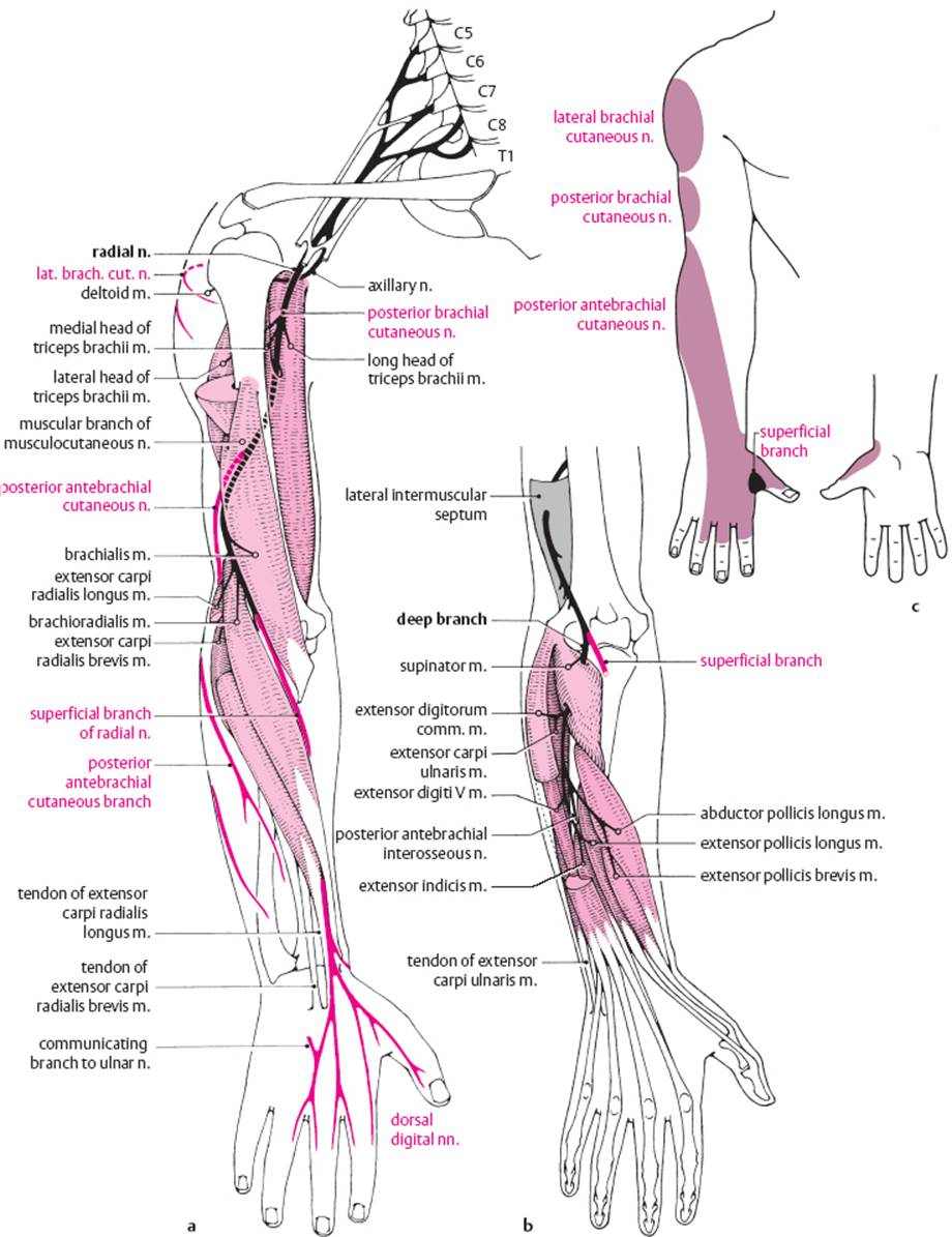 Diseases of the Spinal Nerve Roots and Peripheral Nerves ...
