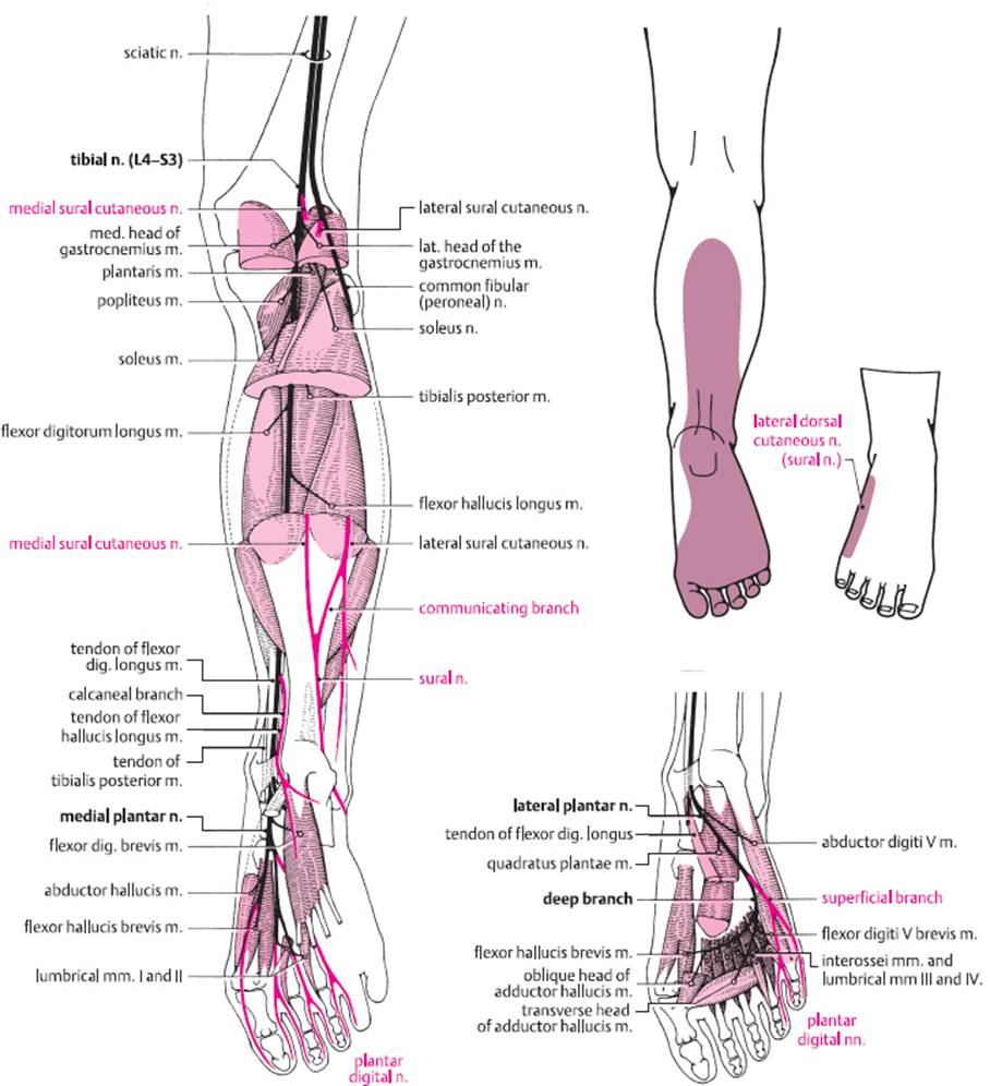 Diseases of the spinal nerve roots and peripheral nerves image pooptronica