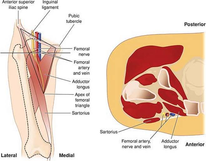 Ultrasound Guided Femoral Nerve Block Peripheral Nerve Blocks A