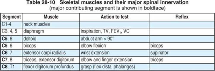 Spine injuries handbook of neurosurgery 7th ed sensory level assessment dermatomes sensory nerves asia standards68 keyboard keysfo Image collections