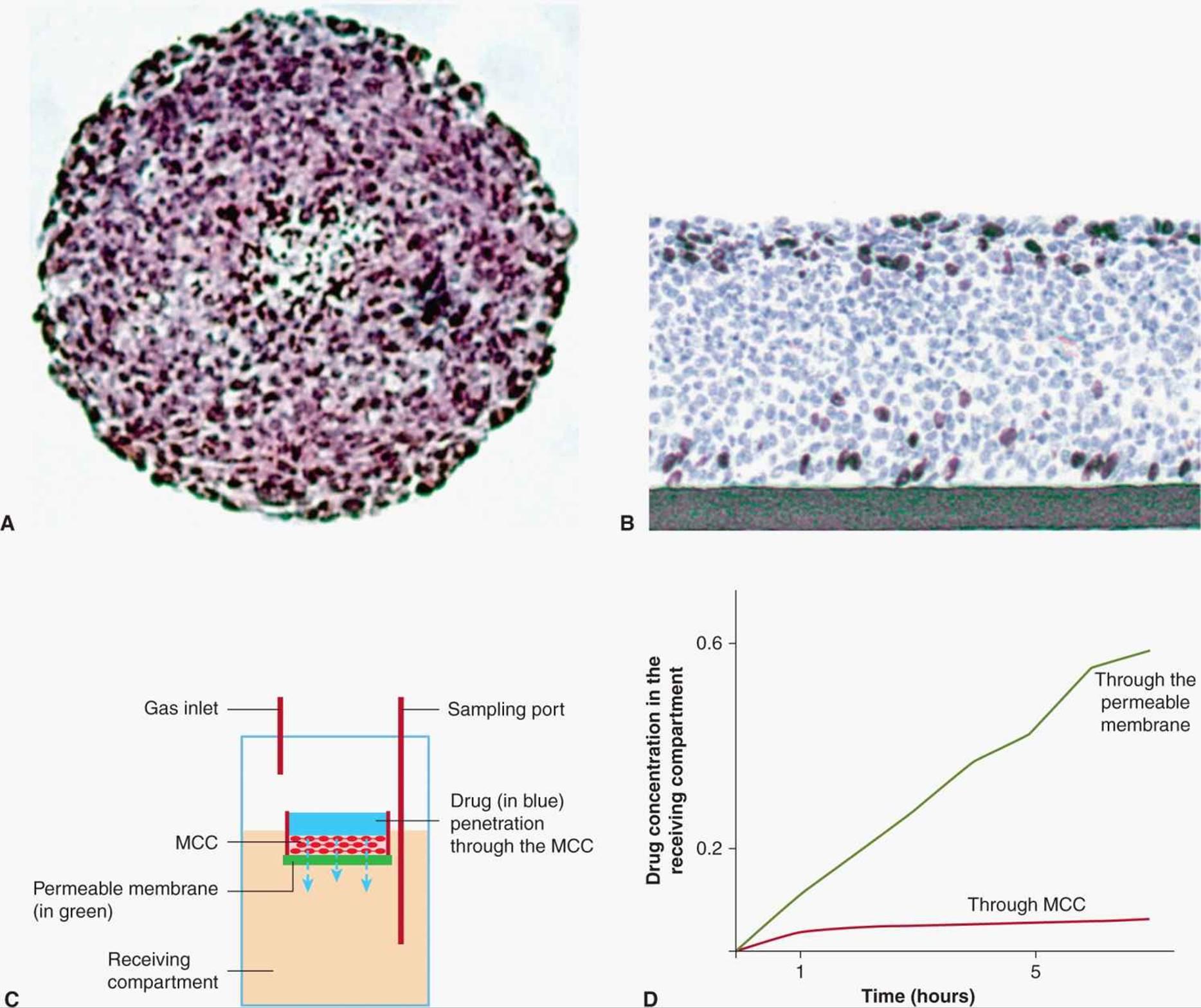 Drug penetration in solid tumors
