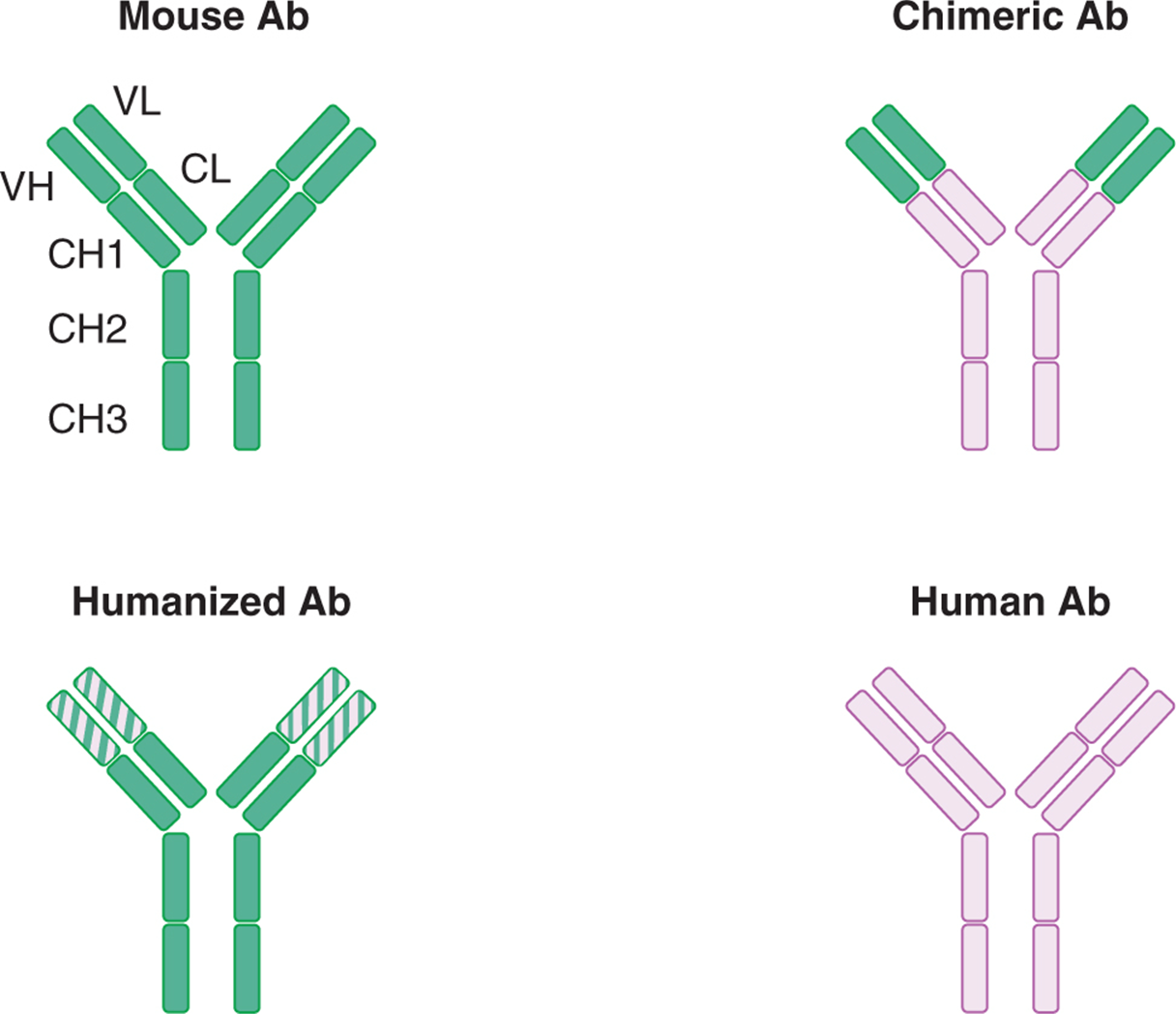 The Immune System And Immunotherapy