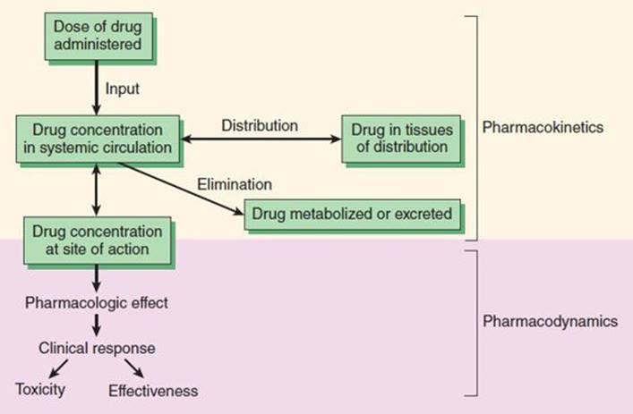 Pharmacokinetics And Pharmacodynamics Rational Dosing And The Time Course Of Drug Action Basic And Clinical Pharmacology 13th Ed