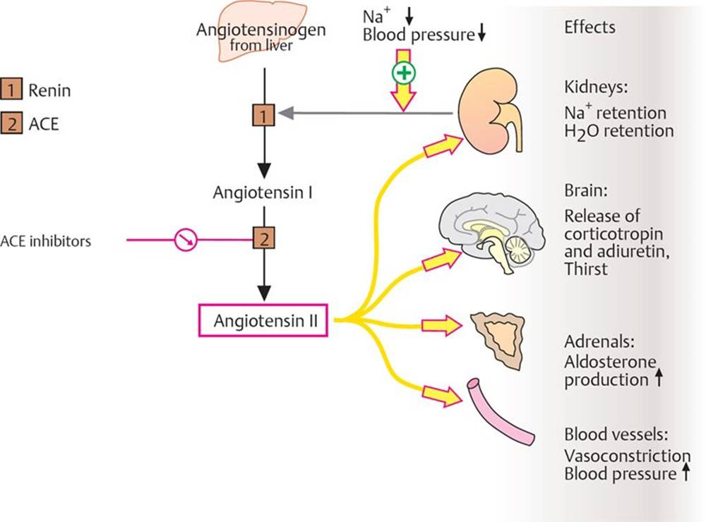 Renal Pharmacology Pharmacology An Illustrated Review