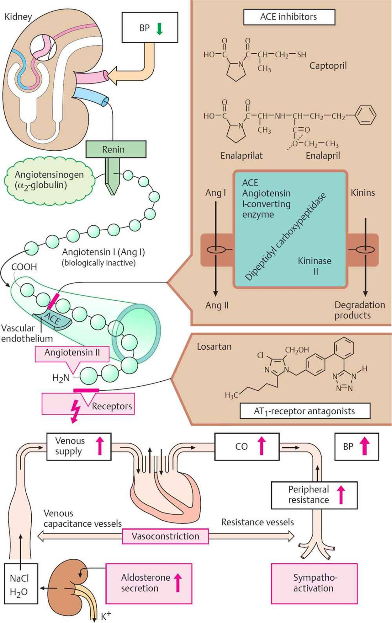 Antihypertensive Drugs Pharmacology An Illustrated Review