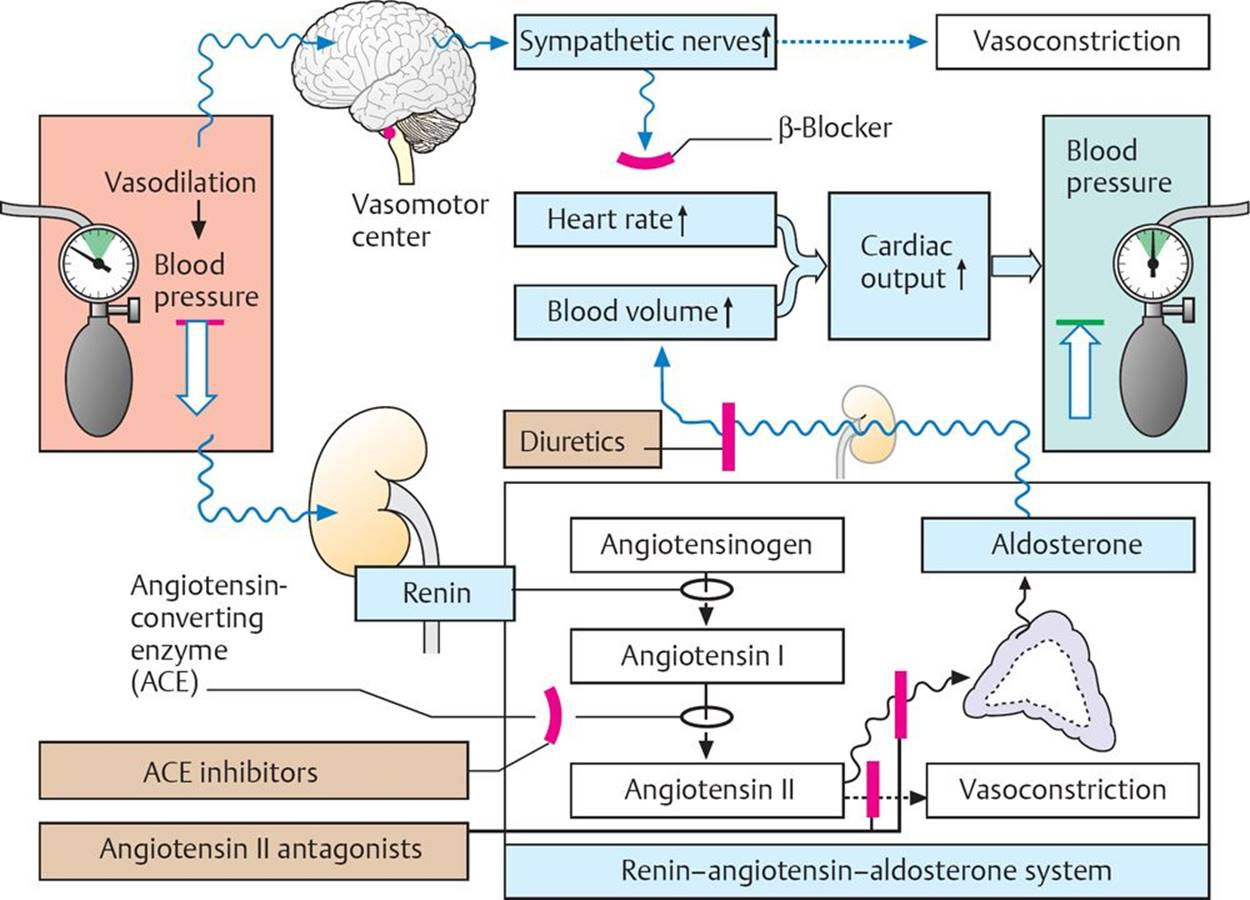 Antihypertensive Drugs - Pharmacology - An Illustrated Review