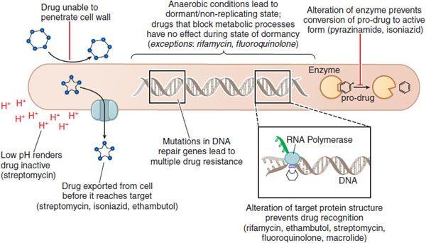 Chemotherapy of Tuberculosis, Mycobacterium Avium Complex