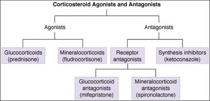 Corticosteroids And Antagonists Katzung Trevor S Pharmacology Examination And Board Review 9th Edition