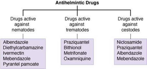 a pinworm tablettáktól a felnőttek véleményéig