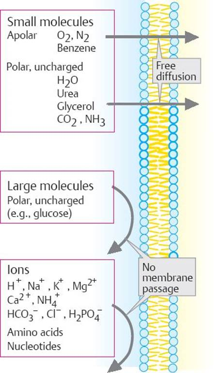 The Cell Membrane - Physiology