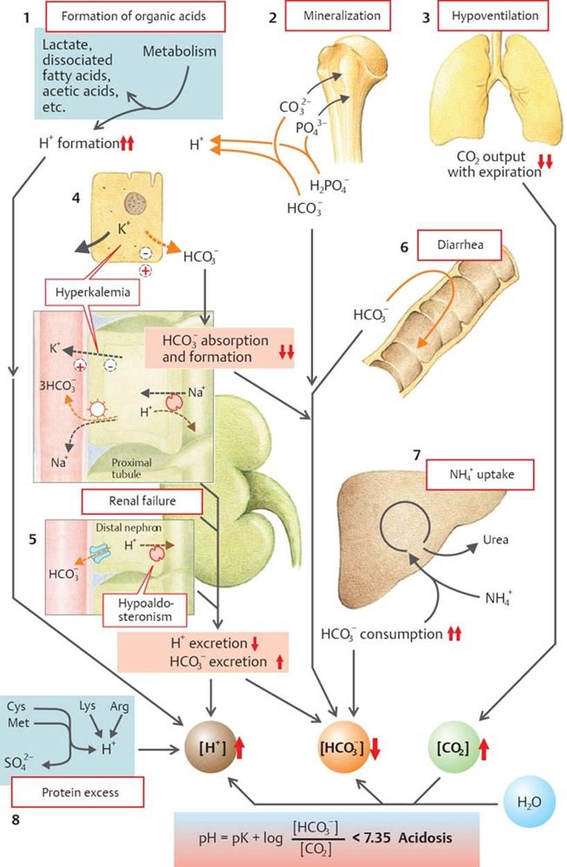 Acid-base Balance - Physiology