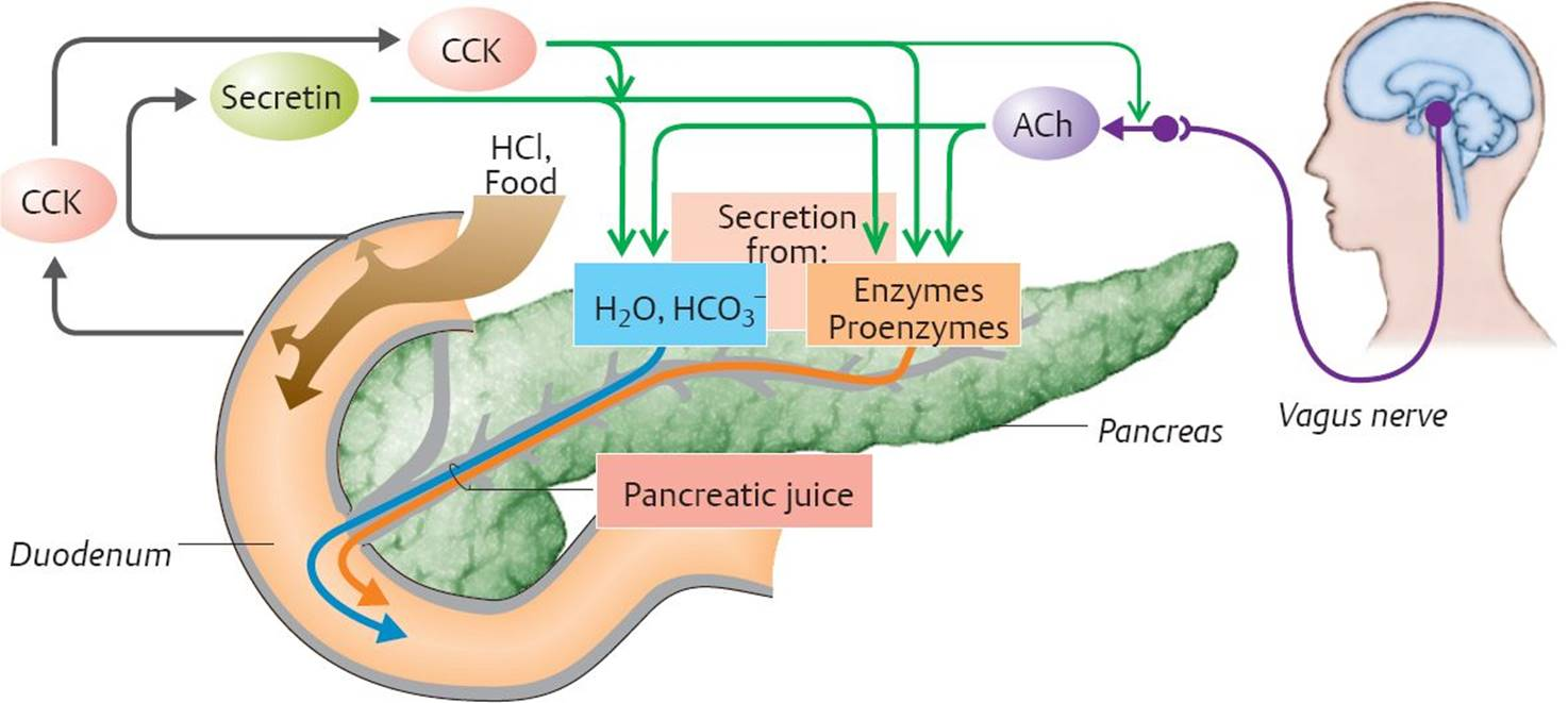 Gastrointestinal Secretion Physiology An Illustrated