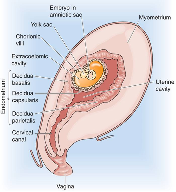 FERTILIZATION, PREGNANCY, AND LACTATION - THE REPRODUCTIVE SYSTEM ...