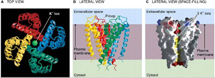 Appendix: Webnotes - Medical Physiology A Cellular and
