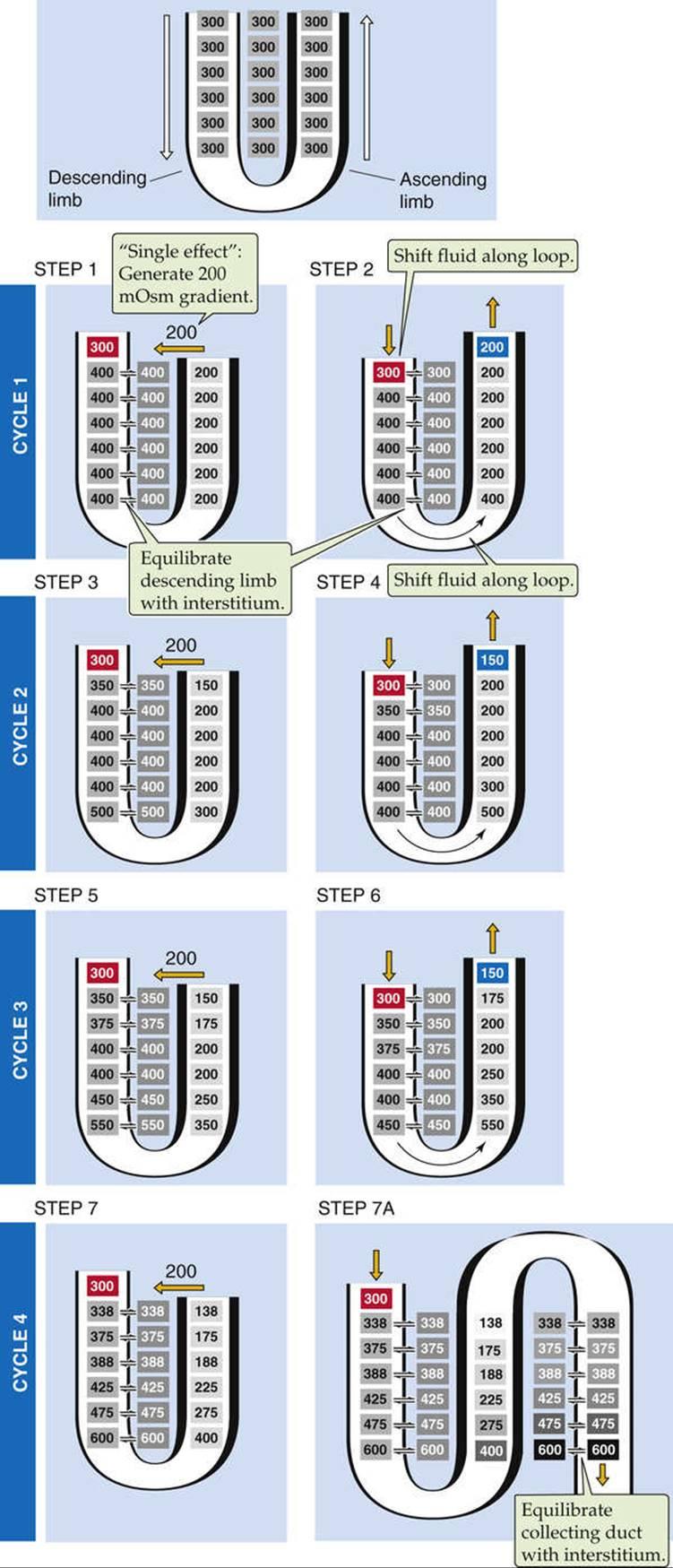 boron boulpaep medical physiology 3rd edition pdf