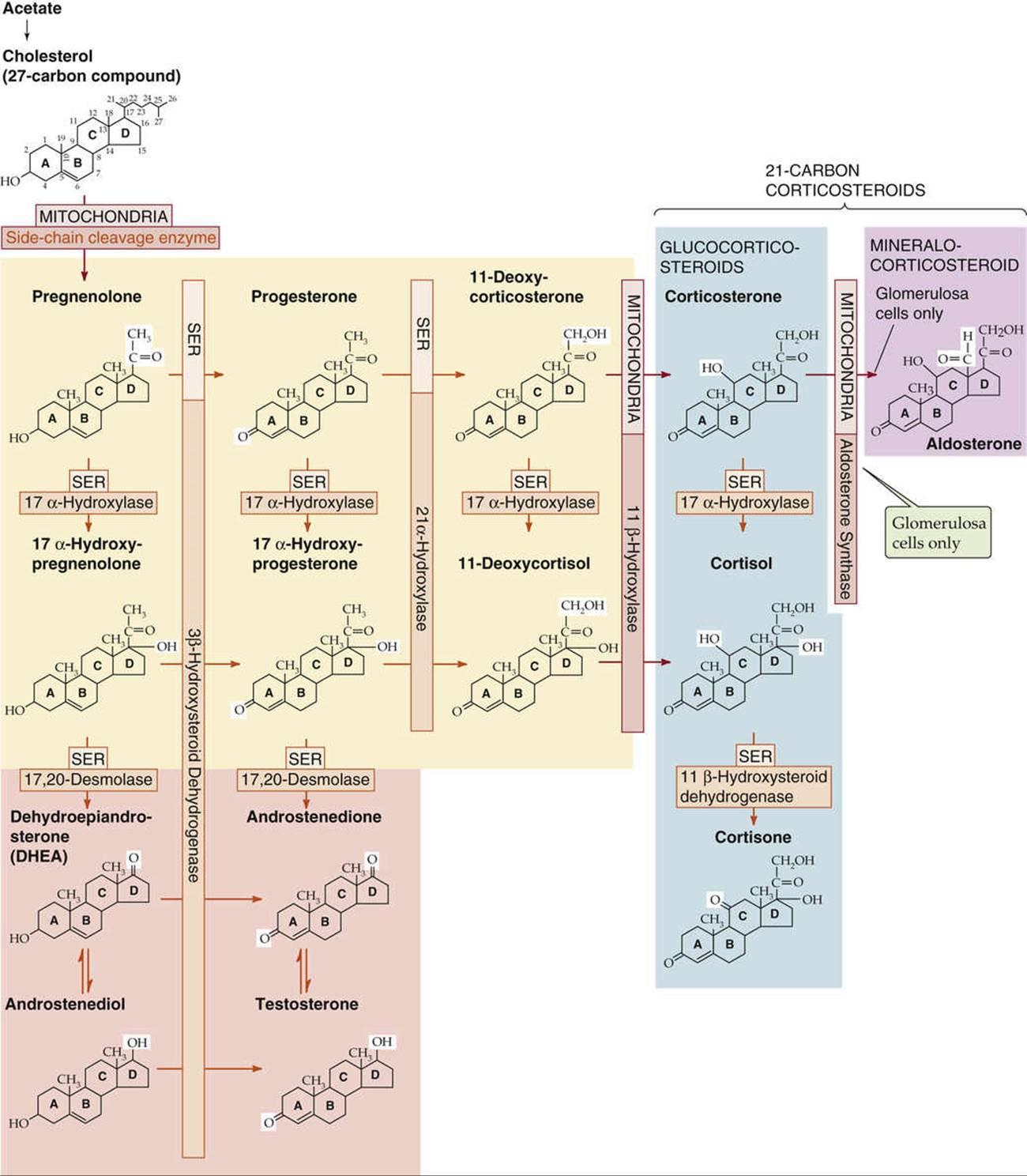 medical physiology boron 3rd edition pdf