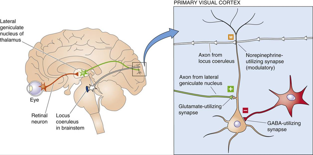 Neurotransmitter Systems of the Brain - Synaptic Transmission in the ...