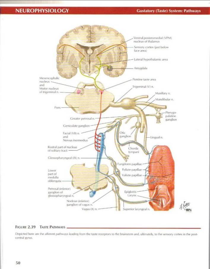 Neurophysiology - Netter's Atlas of Human Physiology (Netter