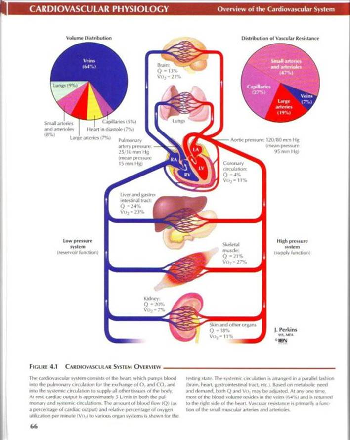 Cardiovascular physiology - Netter's Atlas of Human