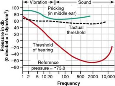 The Sense of Hearing - The Nervous System: B  The Special Senses