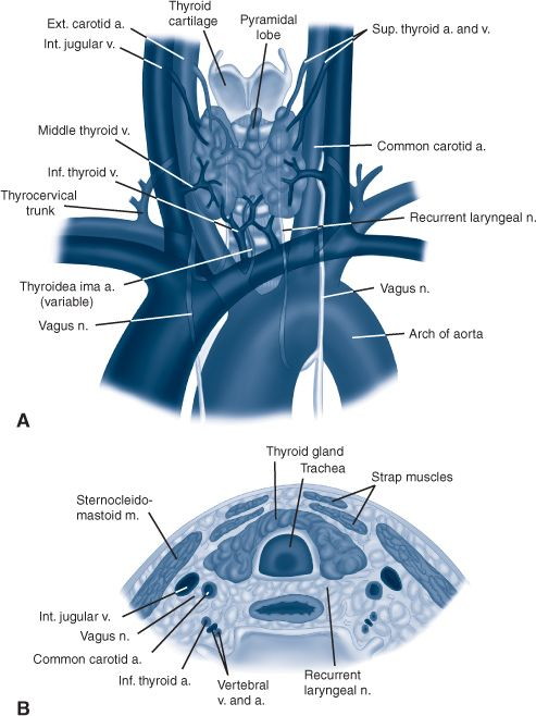 Thyroid Parathyroid And Adrenal Principles Of Surgery
