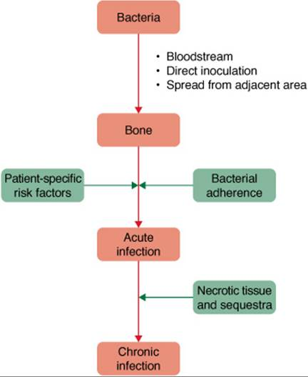 Osteomyelitis - Disorders of Organ Systems - Pharmacotherapy