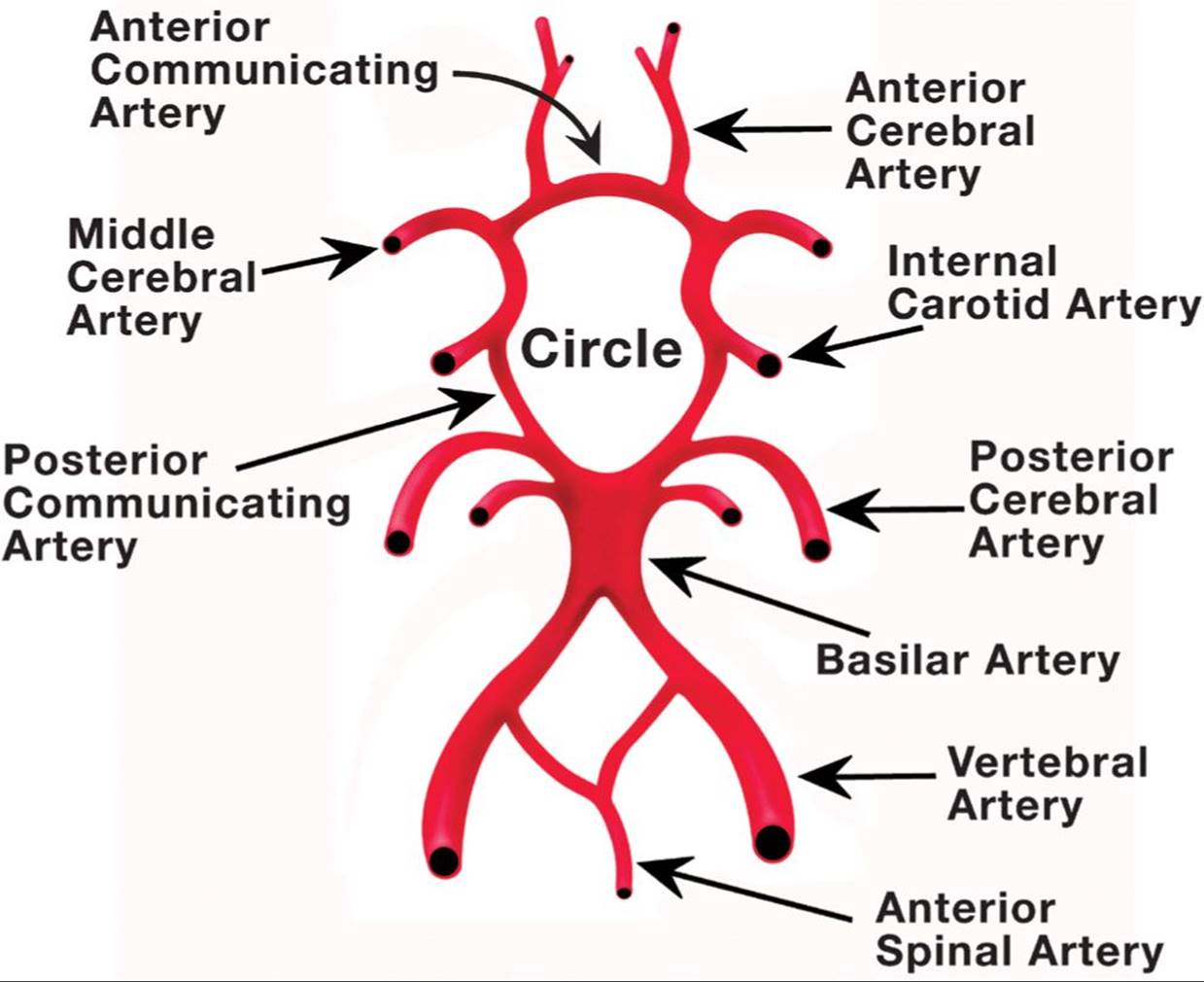 Cerebrovascular Sonography - Lange Review Ultrasonography ...