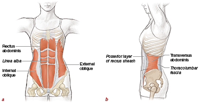 Spine, Core, and Body Alignment - Pilates Anatomy