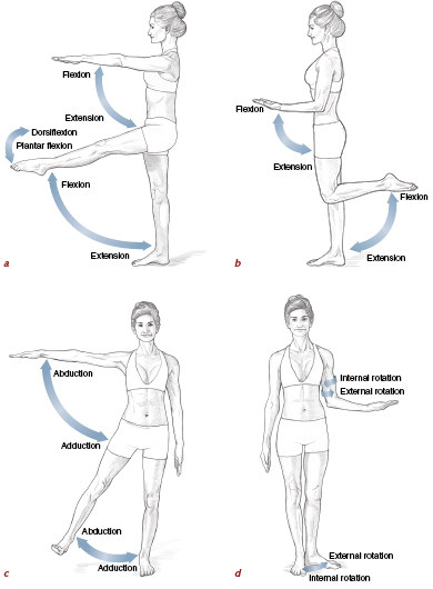 muscles  movement analysis  and mat work