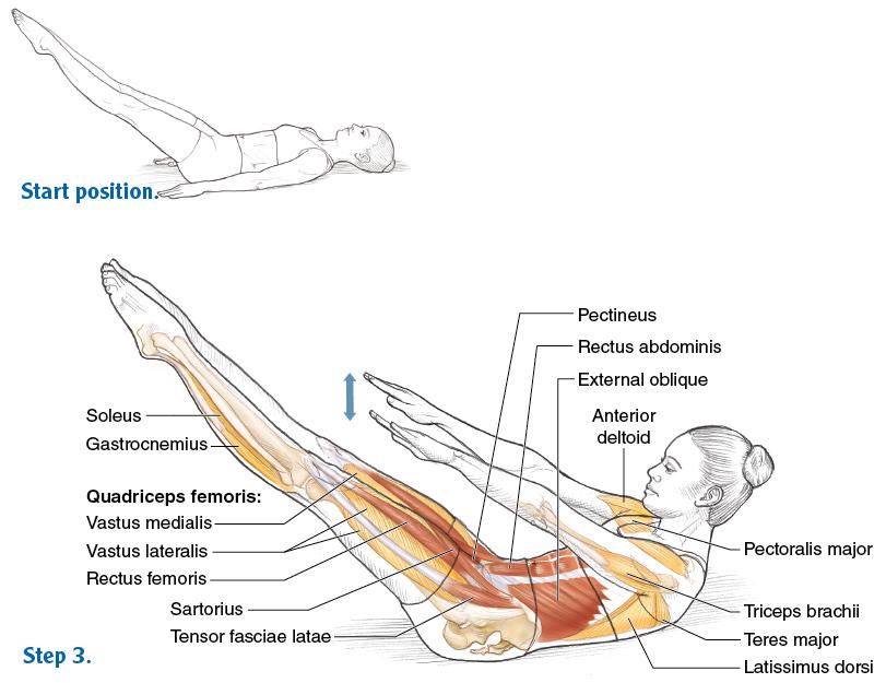 Anatomy For Pilates